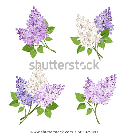 lilac branch Stock photo © FOKA