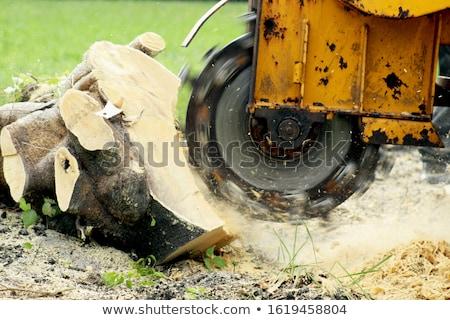 Baum · geschnitten - stock foto © gaudiums