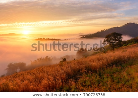 農村 霧の 風景 1泊 村 ツリー ストックフォト © Aliftin