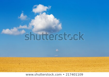 Nice Autumn Field With Clear Horizont And Blue Sky Zdjęcia stock © Artush