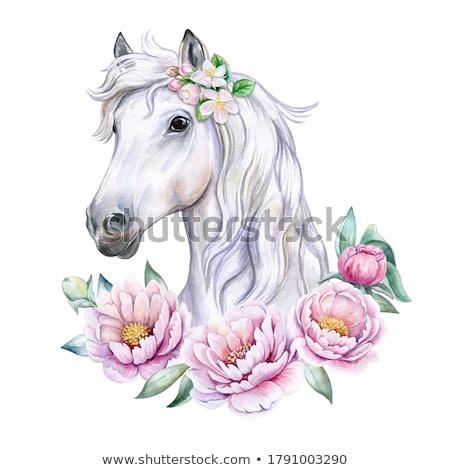 Rosa caballo deporte silueta poder libertad Foto stock © dagadu