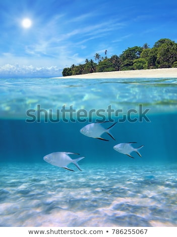 Underwater near the beach of the tropical island Stock photo © ajlber