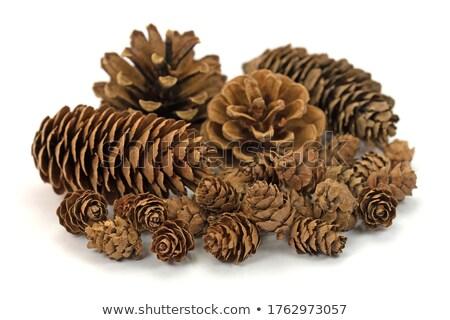 sündisznó · őszi · levelek · keres · étel · barna · erdő - stock fotó © ondrej83