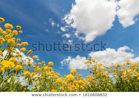 molhado · flor · amarela · macro · abstrato · fronteira · blue · sky - foto stock © ozaiachin