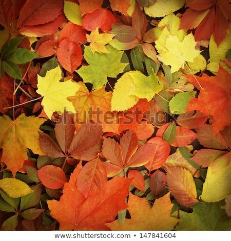 Fraktal sonbahar akçaağaç yaprağı yeşil render ışık Stok fotoğraf © michey
