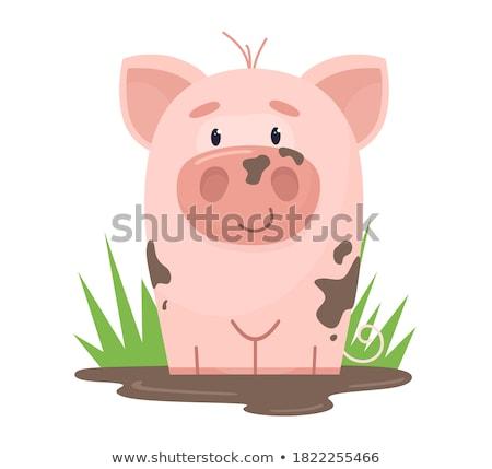 Vergadering modder luipaard kikker gras vijver Stockfoto © ca2hill