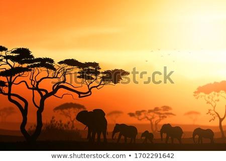 Elefánt sziluett vektor vonal művészet illusztráció Stock fotó © Donvanstaden