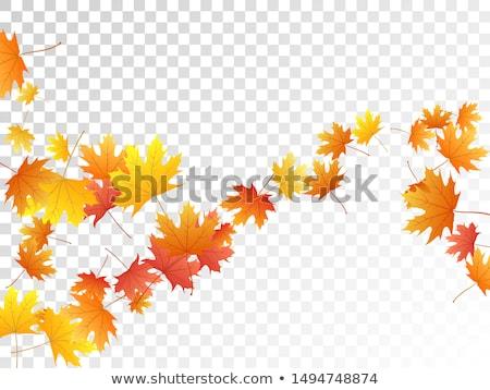 Nostalgiczny jesienią kwiaty trawy charakter tle Zdjęcia stock © Julietphotography