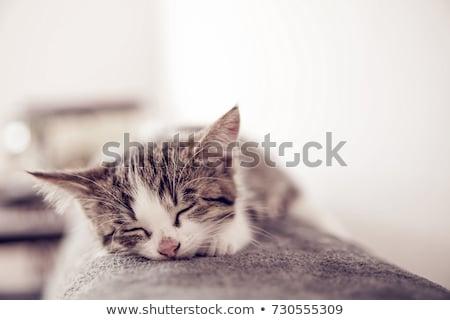 álmos édes kiscica macska narancs jókedv Stock fotó © c-foto