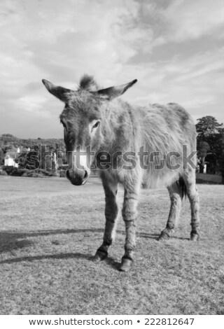 Nieuwe bos ezel bezoekers gezicht gras Stockfoto © sarahdoow