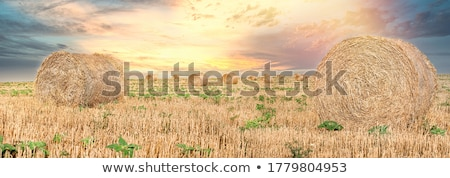 Szalmaszál egymásra pakolva mező aratás idő farm Stock fotó © jenbray