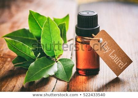 Laurel in the garden with a wooden label Stock photo © Zerbor