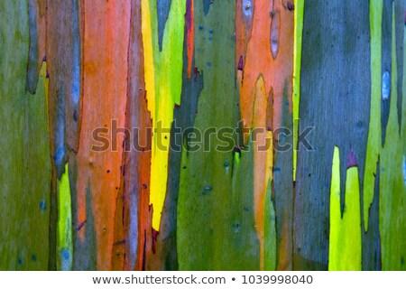 Casca abstrato natureza viajar padrão Foto stock © dirkr