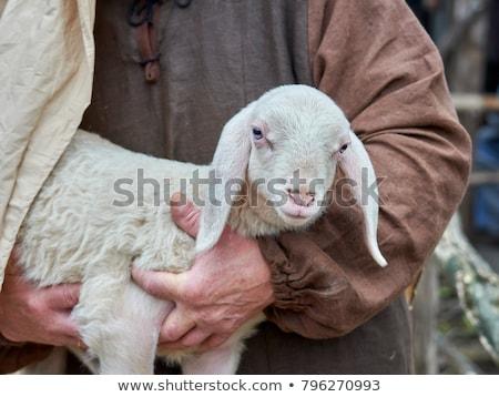 Herder schapen woestijn landschap gras Stockfoto © carloscastilla