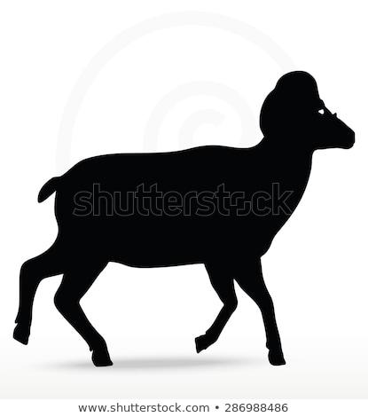 ストックフォト: ビッグ · ホーン · 羊 · シルエット · 徒歩 · ポーズ
