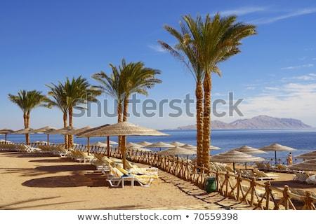 Palm аллеи тропические египетский пляж песок Сток-фото © master1305