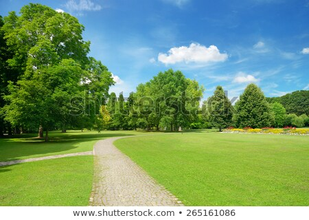 Glade green wood and blue sky with clouds Stock photo © master1305
