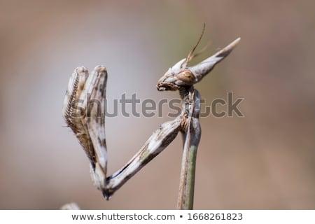 Biológus tanul imádkozik sáska férfi portré Stock fotó © igabriela