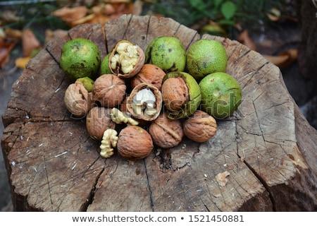 Rijp Open groene walnoot vruchten tak Stockfoto © stevanovicigor