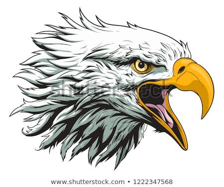 Vector of bald eagle. Stock photo © Morphart