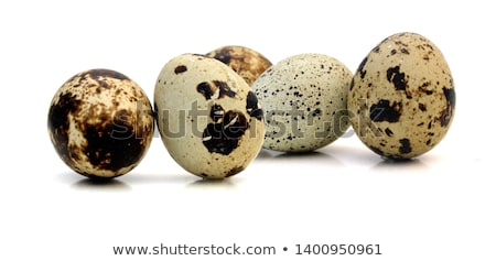 huevo · blanco · uno · naturaleza · aves · desayuno - foto stock © jirkaejc