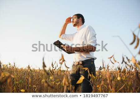 farmer standing in soybean plants rows in cultivated field stock photo © stevanovicigor
