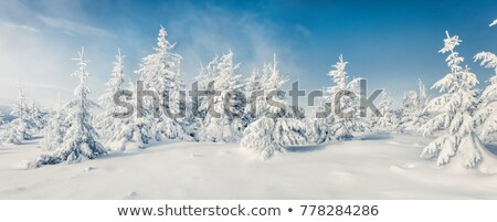 picturesque forest in winter Stock photo © tracer