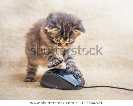 Cat Playing With Computer Mouse Stock photo © doddis