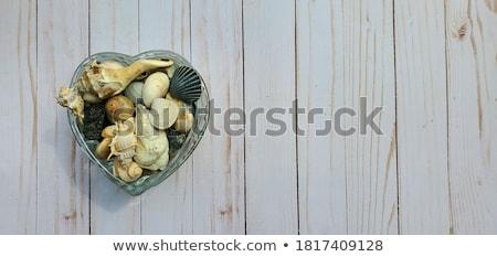 schelpen · collectie · schelpen · vector · ingesteld · zeester - stockfoto © bluering