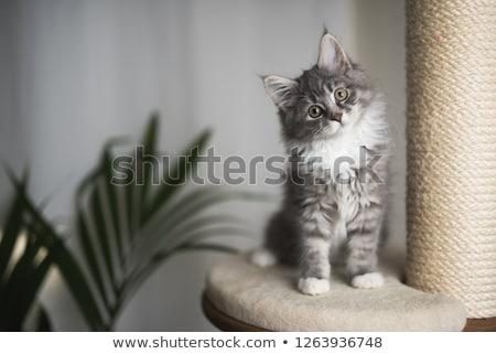 ポスト · 猫 · 孤立した · 白 - ストックフォト © cynoclub