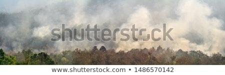 Fire scene Stock photo © bluering