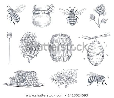 honingbij · cute · vector · honingraat · humoristisch - stockfoto © rastudio