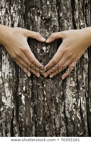 Female hands gesturing heart sign on tree trunk, ecology concept Stock photo © stevanovicigor