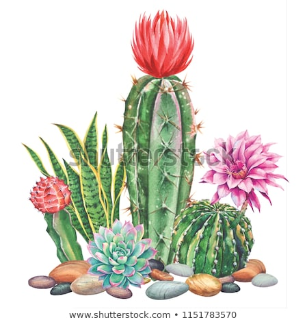 Foto stock: Cacto · flores · esboço · flor · abstrato · fundo