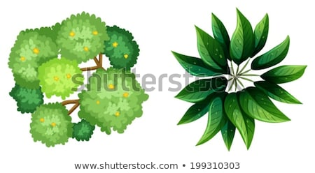 A topview of a plant with elongated leaves Stock photo © bluering