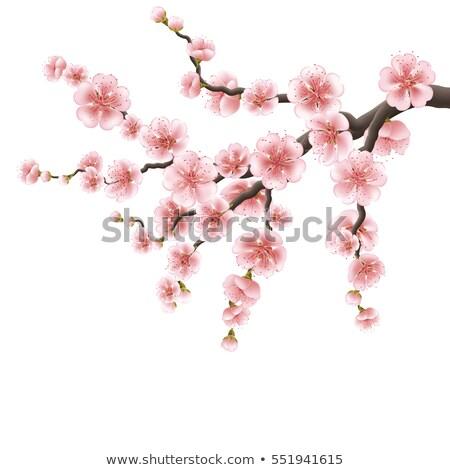 ág · rózsaszín · cseresznyevirág · eps · 10 · japán - stock fotó © beholdereye