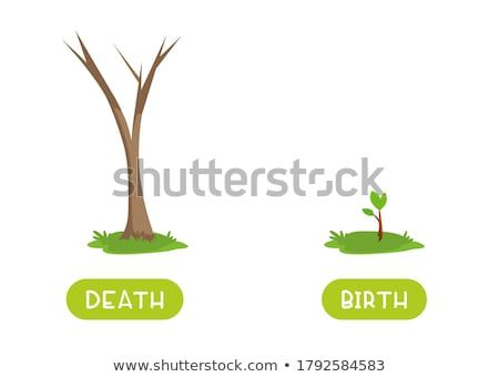 Opposite flashcard for birth and death Stock photo © bluering