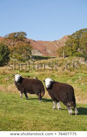English Lake District View 2 Stock photo © peterguess