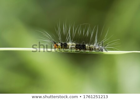 Different types of bugs on green leaves Stock photo © bluering