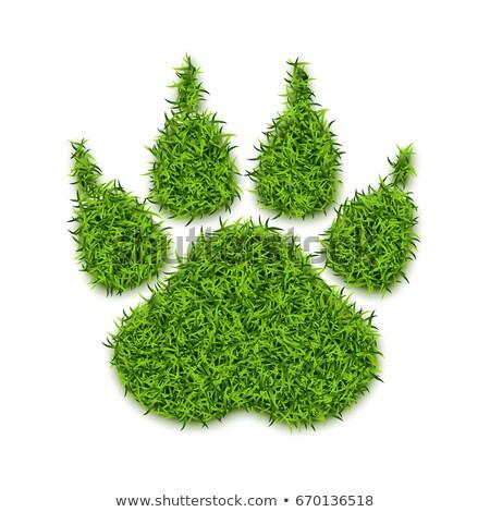 Iarba verde urme izolat alb ecologie 3D Imagine de stoc © tuulijumala