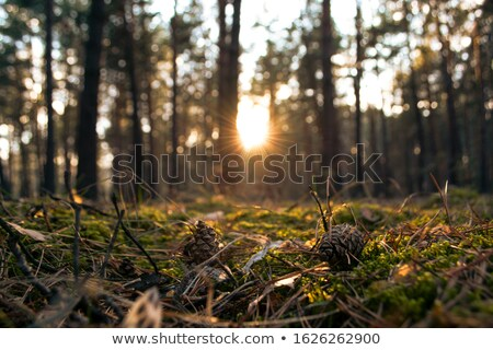 Kegel mos groene zachte bos Stockfoto © Taigi
