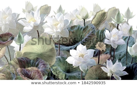 フローラル · 壁紙 · シームレス · 飾り · ファッショナブル · 現代 - ストックフォト © sanyal
