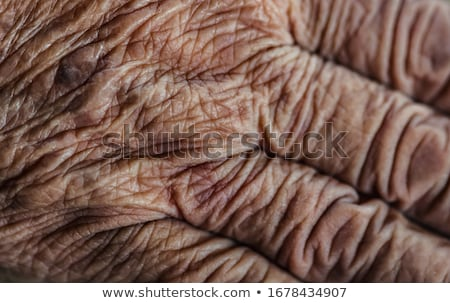 クローズアップ 手 白 スペース 皮膚 ストックフォト © wavebreak_media