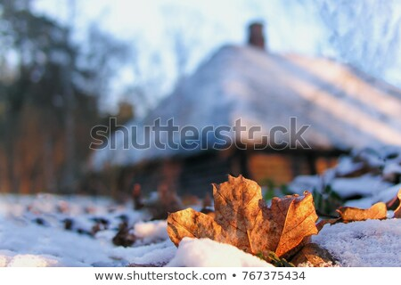 Amarelo congelada maple leaf frio ensolarado inverno Foto stock © Juhku