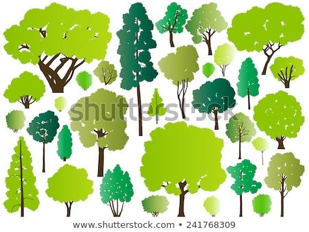 Tölgy izolált nagy öreg fa hatalmas Stock fotó © popaukropa