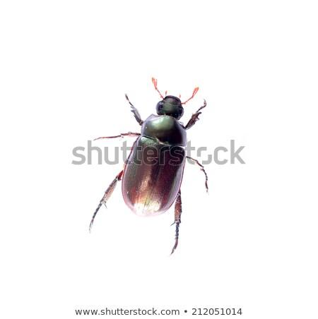 Entediado pequeno besouro desenho animado ilustração olhando Foto stock © cthoman