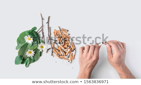Healthy and damaged lung Stock photo © colematt