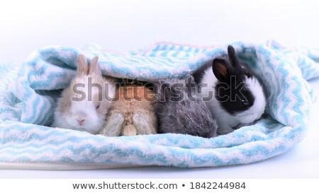 Dormir Conejo de Pascua imagen conejo huevo arte Foto stock © clairev