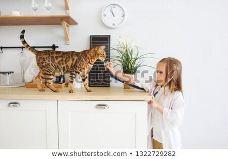девочку · играет · ветеринарный · котенка · животного · ухода - Сток-фото © dashapetrenko
