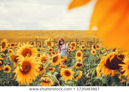 bella · signora · piedi · girasole · campo · fiore - foto d'archivio © elenabatkova
